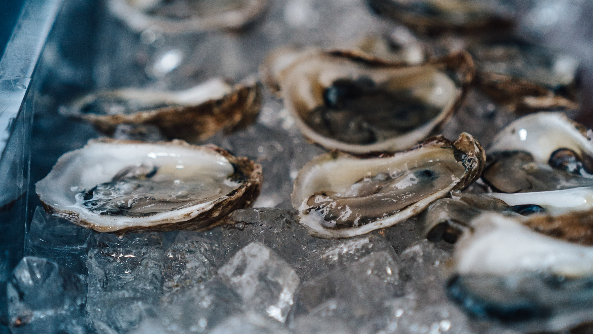 Oysters on the half shell in New Orleans