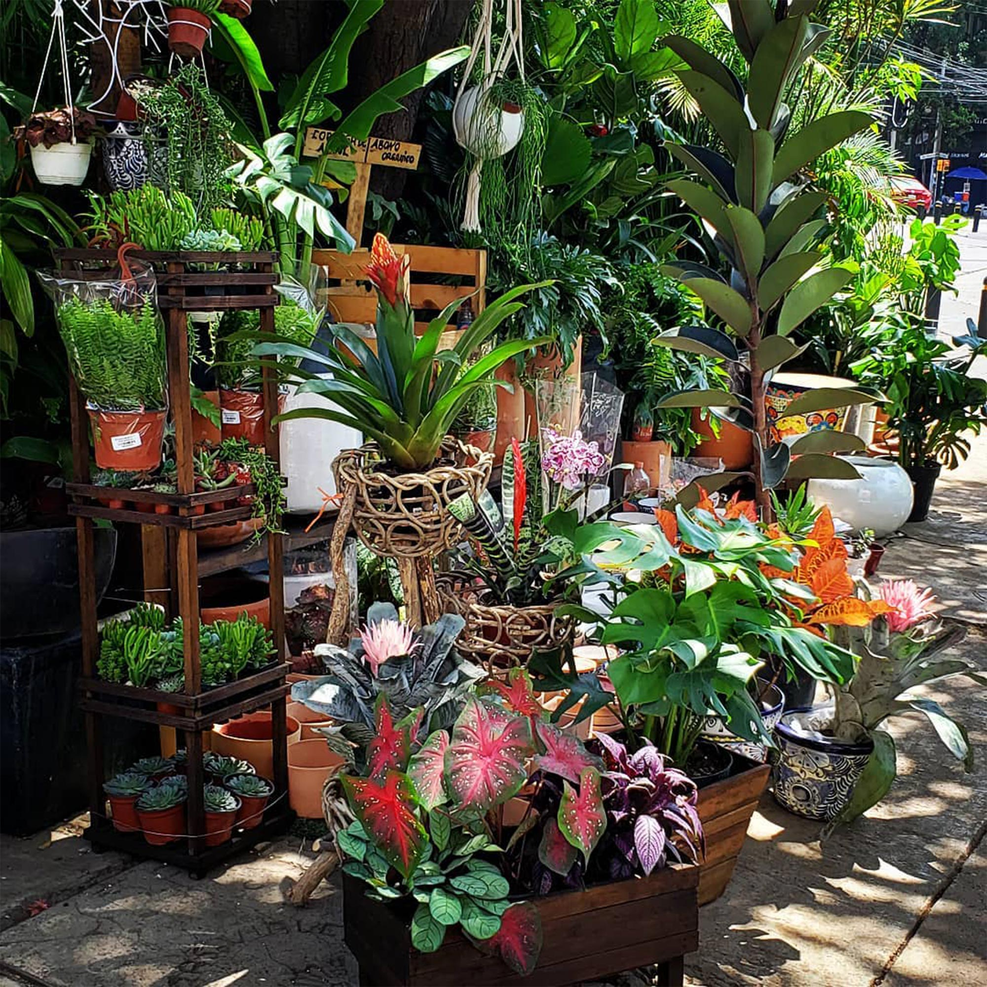 Plants by Madre Tierra at their stand in Roma neighborhood in Mexico City