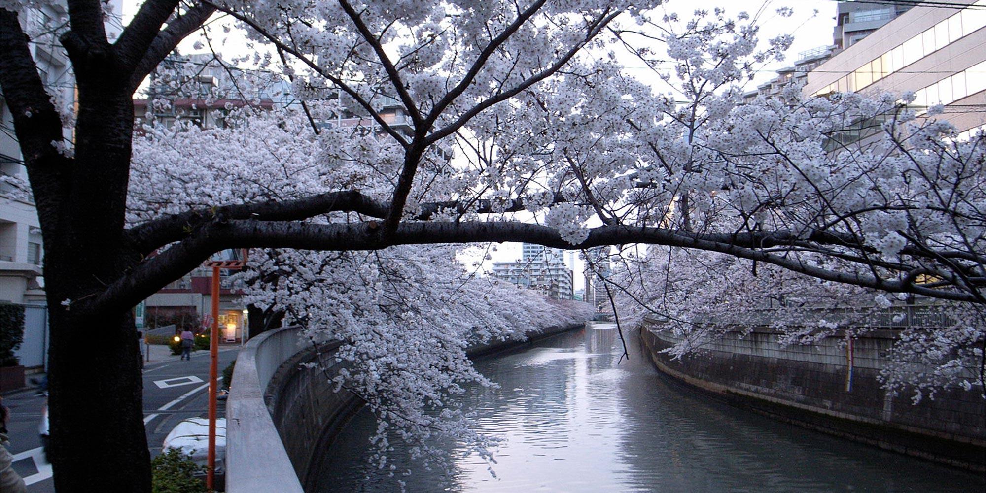 Meguro Canal